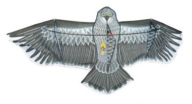 Cerf-volant motif aigle