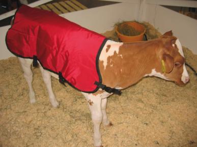 Couverture pour veau, avec garnissage thinsulate, environ 69cm, taille unique