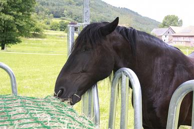 Filet à foin pour chevaux 2,80x2,80mcomplet avec corde élastique et crochet