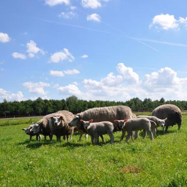 Filet moutons, orange 90/1 - 14/V - 50m