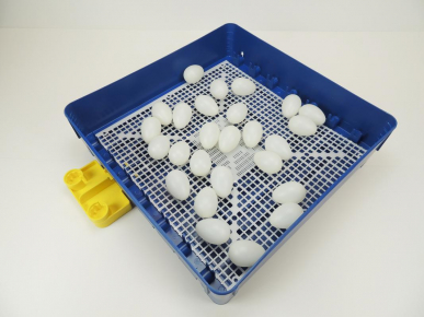 Couveuse semi-automatique GW, 56-70 œufs de poule