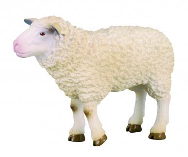 Mouton CollectA