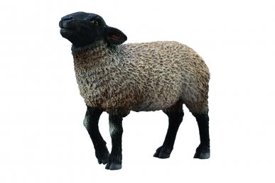 Mouton Suffolk Anglais CollectA