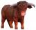 Taureau Highland CollectA